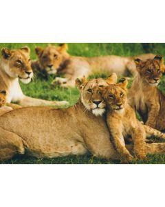 Protect 330 sq metres of habitat in East Africa