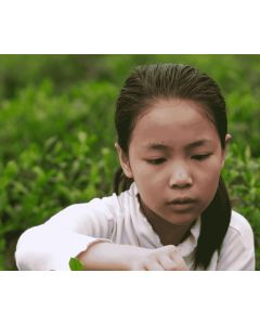 Help 10 rural Chinese households recycle farm waste into clean energy
